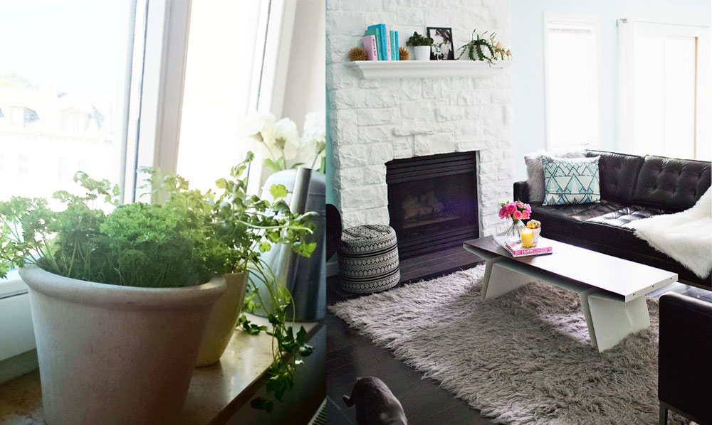 Parsley | Cilantro | Herbs | Living Room Make Over