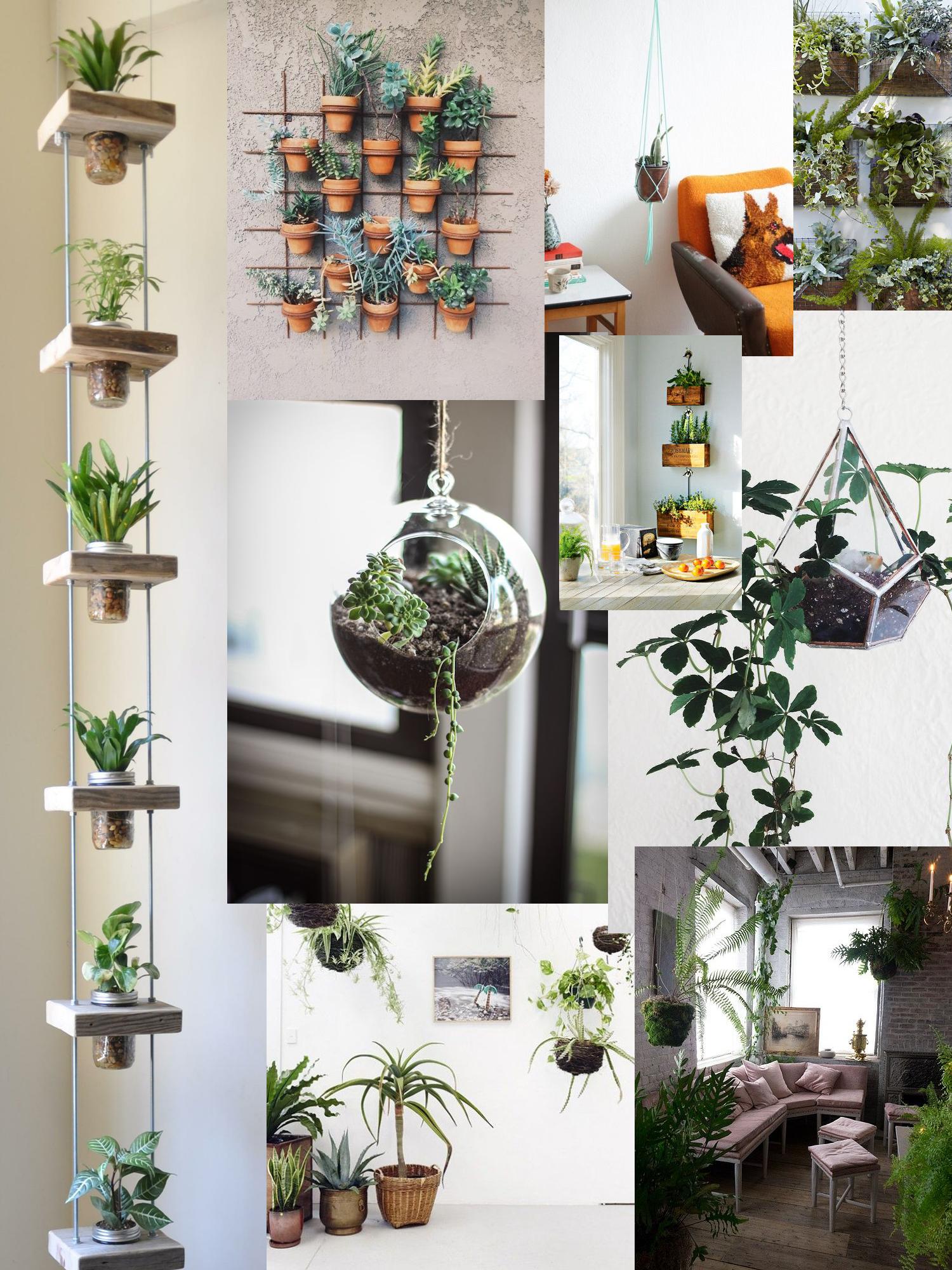 Hanging Plants |Succulents